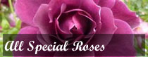 All Special Roses