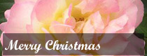Merry Christmas Roses