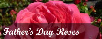 Father's Day Roses