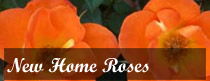 New Home Roses